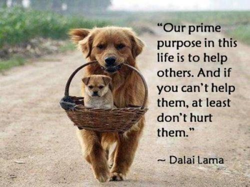 prime-purpose